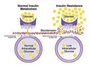 Insulin Action